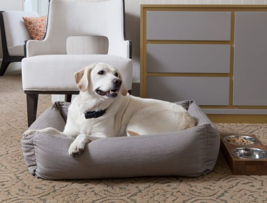 A dog in a dog bed at The Benjamin Hotel in NYC