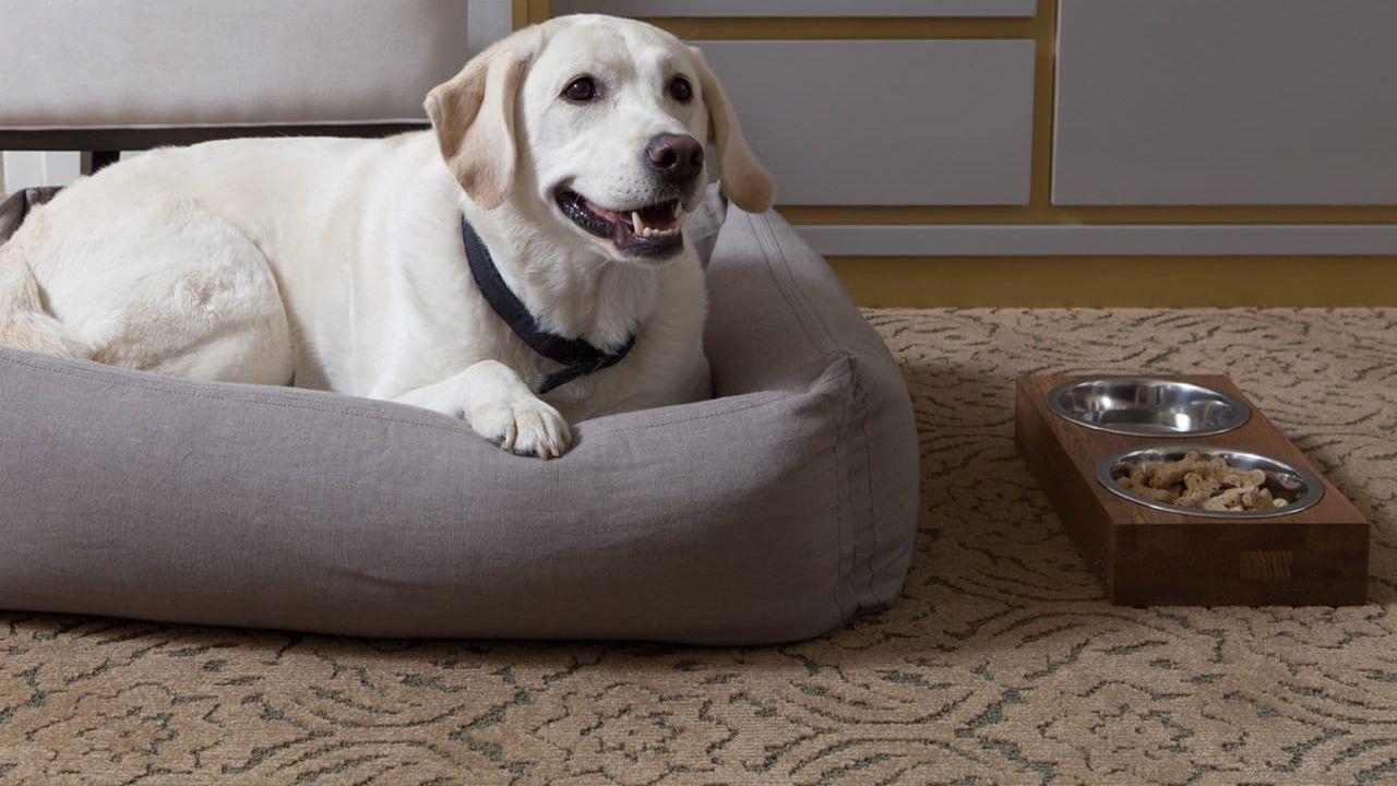 The Benjamin Hotel Good Dog